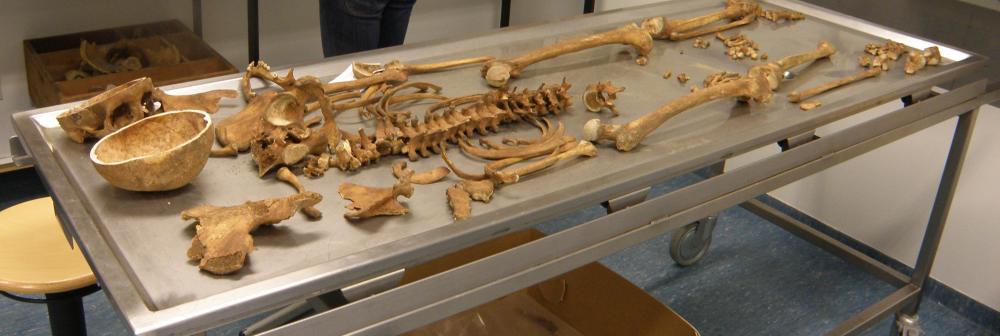 Inleiding in de Fysische Antropologie